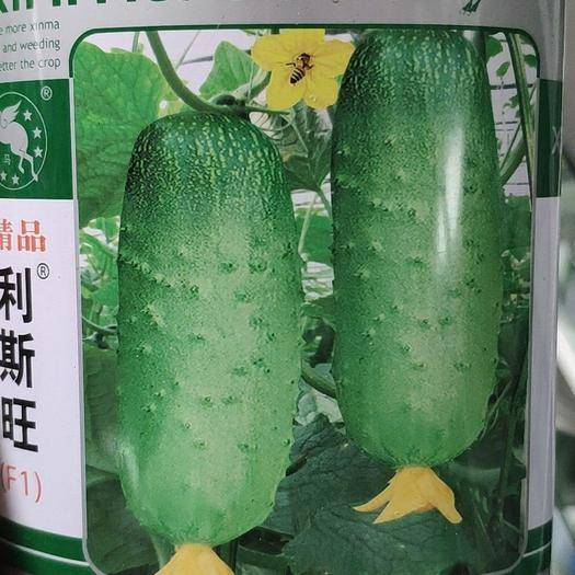 四川省成都市新都區 水果黃瓜種子