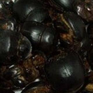 河北省保定市安國市蜣螂 即大將軍 爬蟲類中藥 無提取 代打粉 袋裝