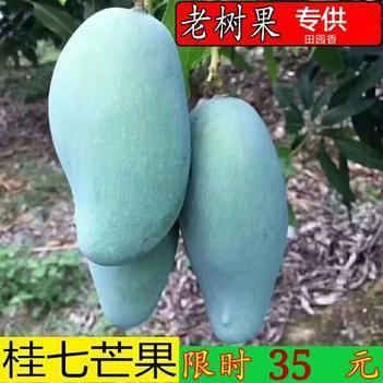 【7月7號新品促銷】桂七芒 色澤伊人 口感香甜 5斤/9斤裝