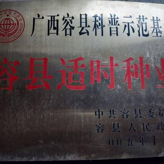 广西壮族自治区玉林市玉州区无核沃柑苗 嫁接苗 0.5~1米