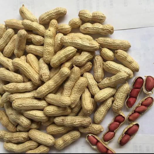 江蘇省徐州市賈汪區四粒紅花生 帶殼花生 鮮貨