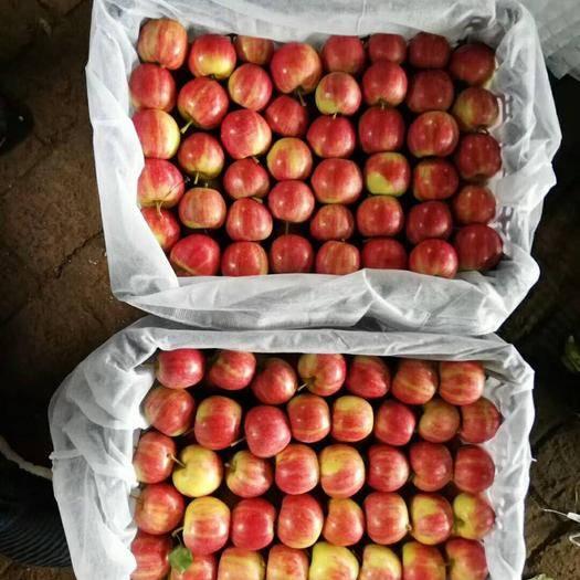 吉林省四平市铁东区 123苹果 k9 龙冠 代收有场地