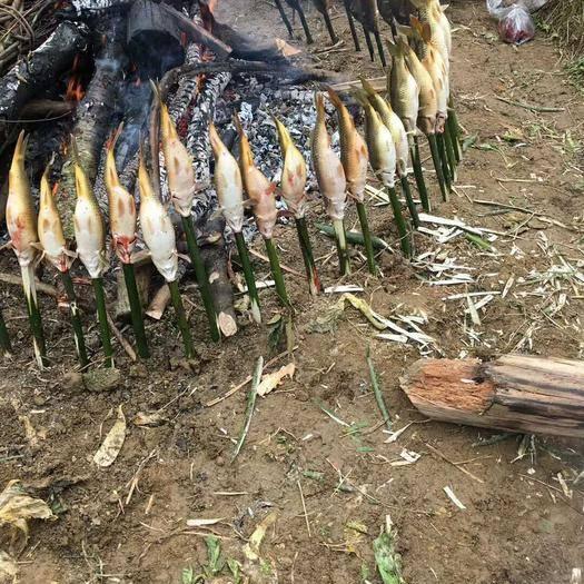 贵州省黔东南苗族侗族自治州从江县稻花鱼 本人有大量鱼源,想找有实力的收购商进行长期合作!