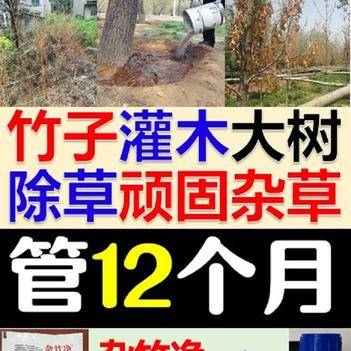 1年不长草特杀竹子药顽固杂草 大树灌木小树除草剂
