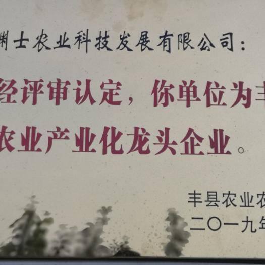 江苏省徐州市丰县 全红烟富10号冰糖心