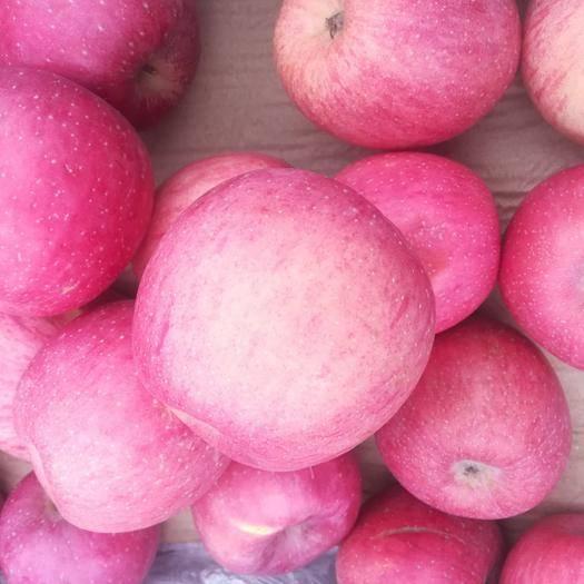 贵州省安顺市紫云苗族布依族自治县红富士苹果 大山里的红富士,无污染,新鲜,孕妇的选择