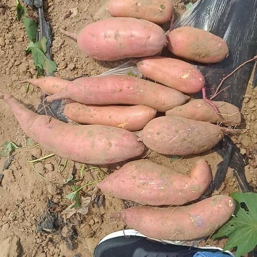 山东省枣庄市滕州市红心红薯 混装通货 红皮
