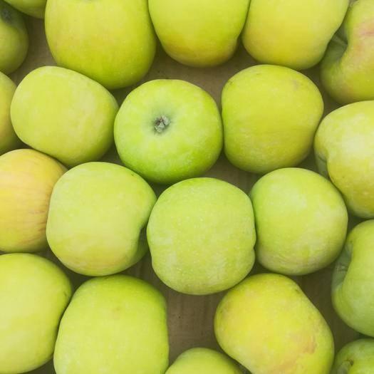 贵州省安顺市紫云苗族布依族自治县 贵州大山里的青苹果,口感脆甜,无污染的新鲜苹果