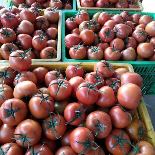 甘肃省武威市凉州区 甘肃武威市凉州区大棚西红柿大量供应