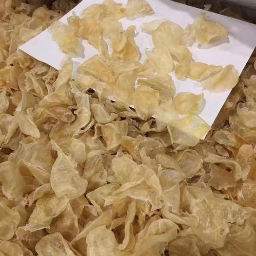 广东省广州市南沙区鱼胶 特价迷你鸡蛋胶干净原色,足干,性价比超高的一款小鱼肚一斤大包