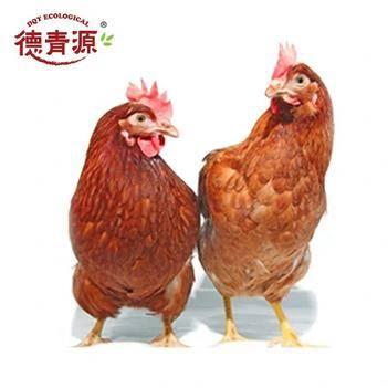 雞肉類 德青源生態老母雞白條(11kg/箱)