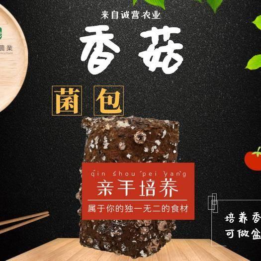 上海市浦东新区香菇菌种 有机香菇菌包