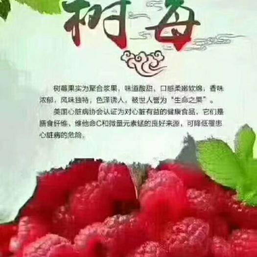 新疆維吾爾自治區伊犁哈薩克自治州尼勒克縣 樹莓覆盆子罐頭