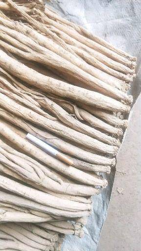 甘肃省定西市渭源县 党参特大条无硫新货1.0以上         双十一特价包邮
