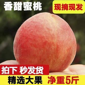 沂蒙山水蜜桃現貨脆甜現摘現發新鮮桃子水果五斤包郵