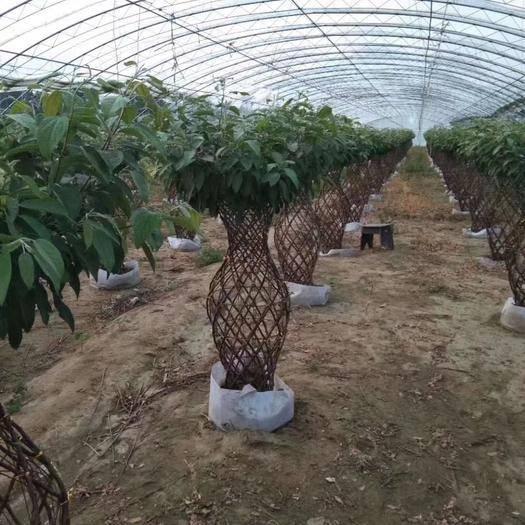 河南省南陽市方城縣農技人員 花瓶編制技術培訓