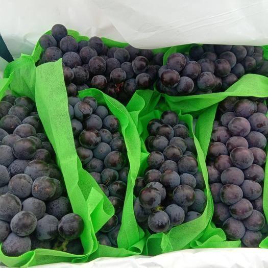 河北省石家庄市晋州市京亚葡萄 1.5- 2斤 5%以下 1次果