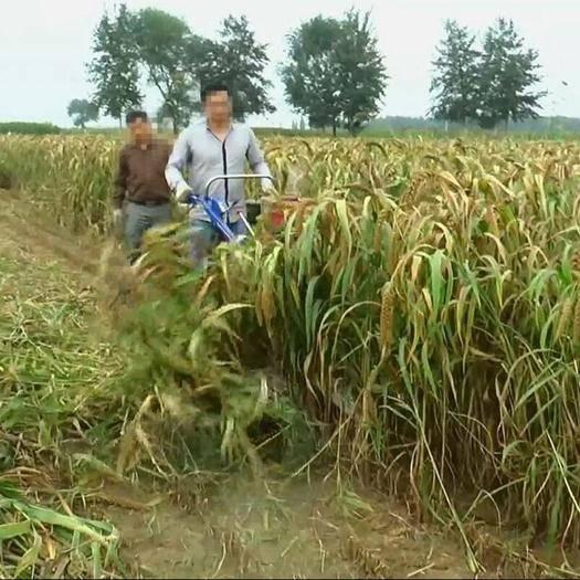 山东省济宁市曲阜市收割机配件 新型芦苇收割机 家用小型芝麻收割机 手扶式艾草收割机