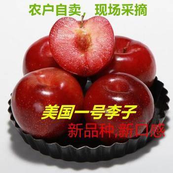 【包邮】【一件即发】 美国一号 甜红李子 陕西 农户直发