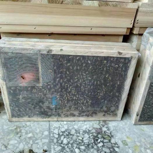 廣西壯族自治區玉林市容縣 中蜂籠蜂半斤蜂帶王198元包郵