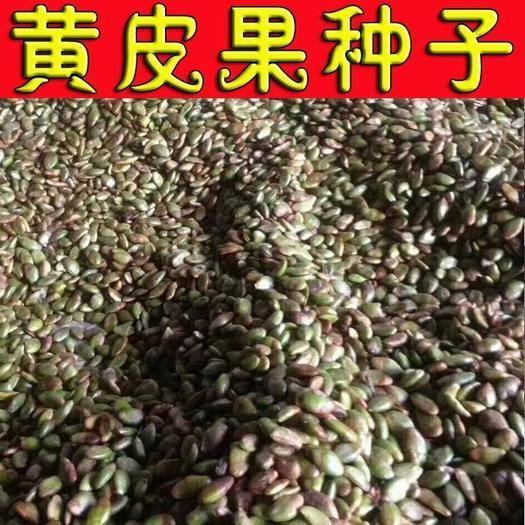 廣西壯族自治區桂林市陽朔縣 黃皮果種子