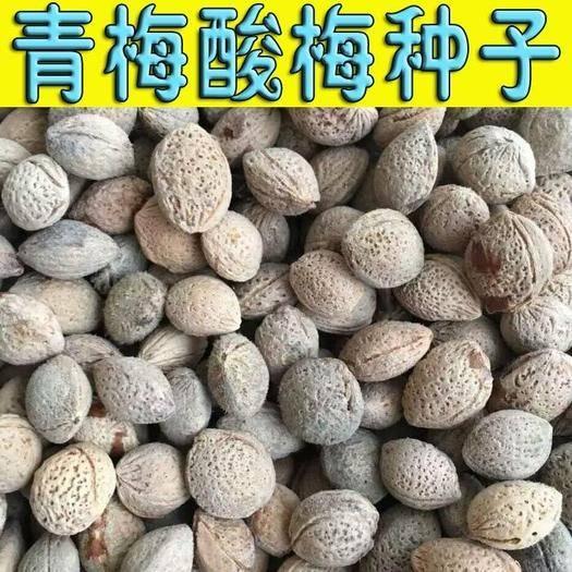廣西壯族自治區桂林市陽朔縣 青梅種子烏梅種子酸梅種子