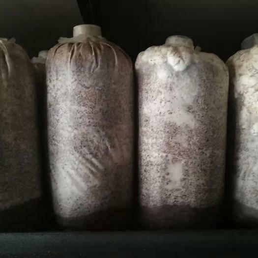 陕西省汉中市汉台区 香菇菌种