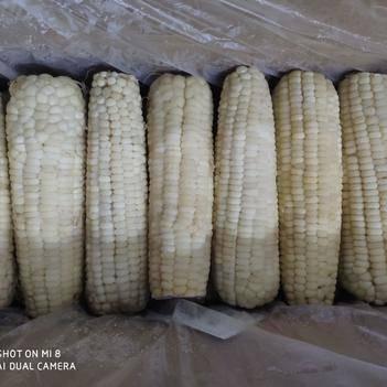 速凍玉米粒 速凍粘玉米 粘玉米
