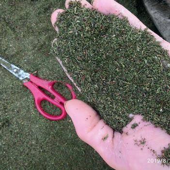 正宗贵州非种植无硫干品中药材青蒿叶纯叶晒干货产地直供一手货源