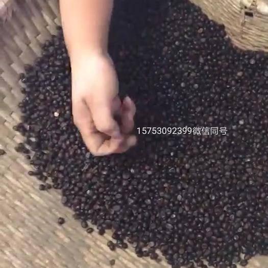山東省菏澤市牡丹區中藥材赤芍 赤芍籽赤芍苗赤芍
