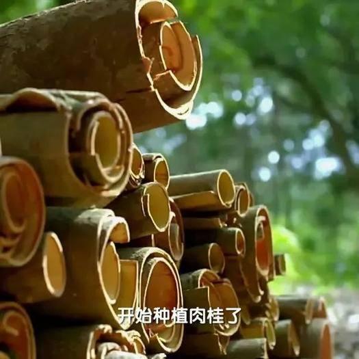廣東省云浮市羅定市 一級肉桂國家地理標志產品央視采訪