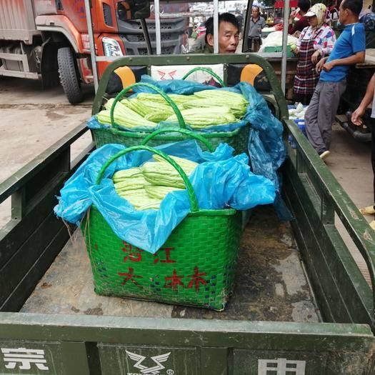 广西壮族自治区南宁市西乡塘区 苦瓜大量供应货源稳定价格低每天可以发五万斤