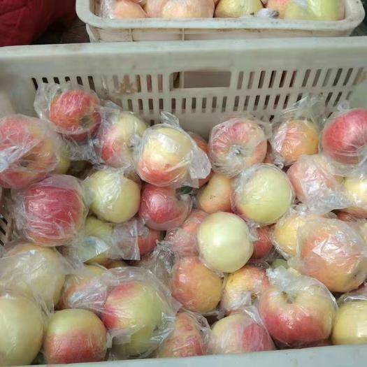 山東省日照市莒縣 美八蘋果大量上市