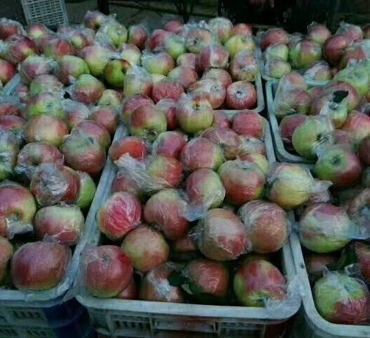 山東省臨沂市沂水縣 紅富士蘋果大量上市