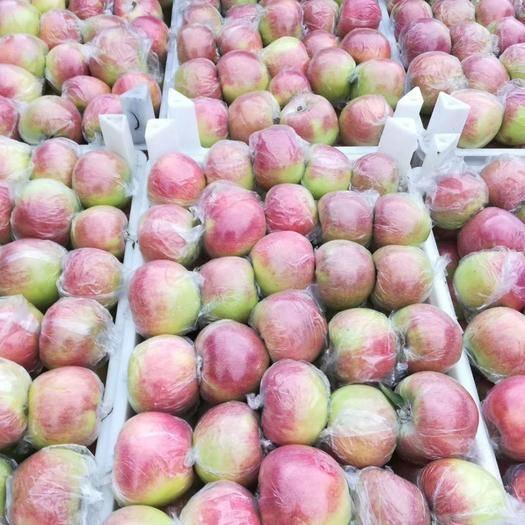 山東省臨沂市沂水縣 美八蘋果!山東美八蘋果!山東蘋果