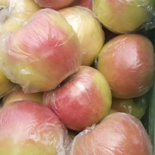 山東省聊城市冠縣 蘋果嘎啦大量供應,美八,早富士供應,質量保證,歡迎來采購。