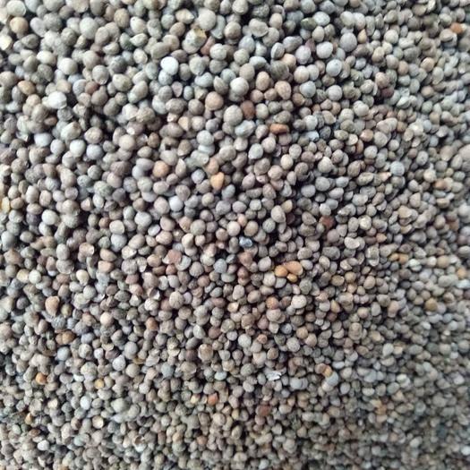 四川省成都市金牛區 蘇籽蘇麻榨油喂鳥做食品出油率40%左右過風過篩凈貨大量批發