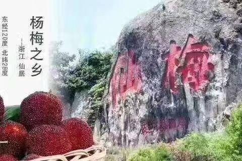 浙江省臺州市仙居縣東魁楊梅 3 - 4cm