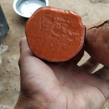 优质西瓜红