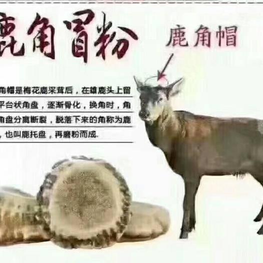 吉林省长春市双阳区梅花 鹿角帽鹿托盘粉