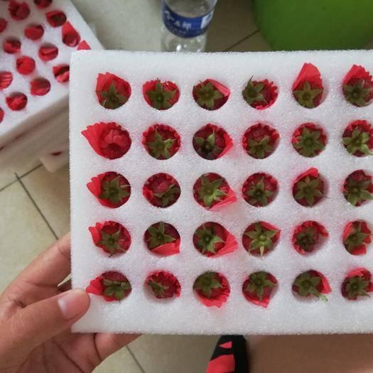 河南省安陽市湯陰縣 樹莓鮮果,樹莓凍果,樹莓苗,當天直采直發!