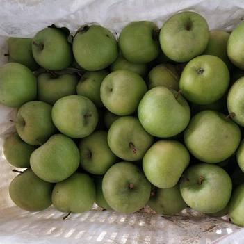 澳洲青蘋果 澳洲青蘋二級果,價格美麗