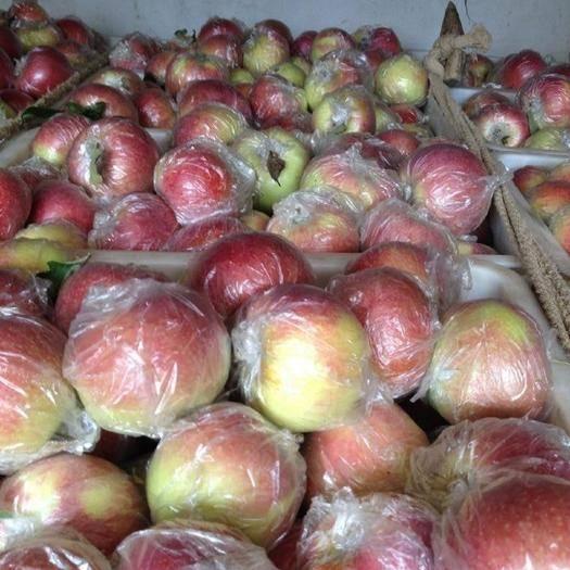 山東省煙臺市棲霞市 美八,嘎啦,紅露蘋果,一首貨源,質量保證