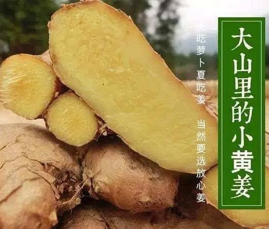 湖南省永州市双牌县姜薯 老姜 姜母 小黄姜价格以实时为准,