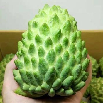 泰国牛奶凤梨释迦果种子大果 进口水果番荔枝释迦佛头果500克