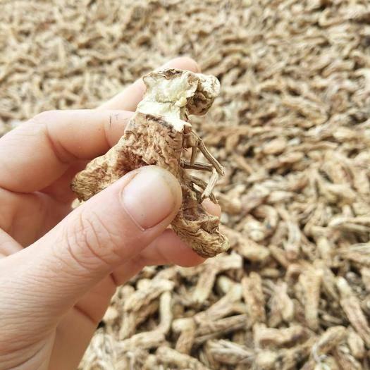 安徽省阜阳市颍上县知母 自己种植药材,无中间商质量好价格优