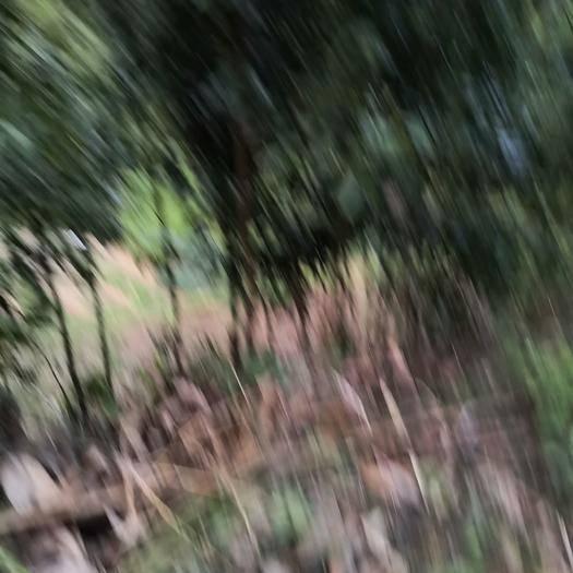 廣西壯族自治區玉林市容縣肉桂