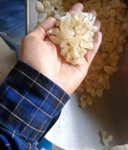 廣東省廣州市越秀區野生桃膠 雪燕C++印度進口天然雪燕整柜 批發50斤/袋