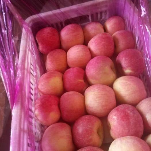 山東省臨沂市沂水縣 沂蒙山蘋果批發1000