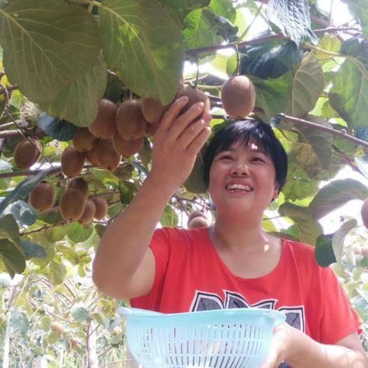 陕西省西安市周至县 陕西周至(徐香猕猴桃)健康水果有机食品